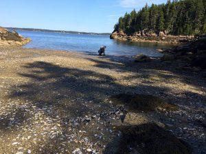 Scallops beach:low tide 6 copy